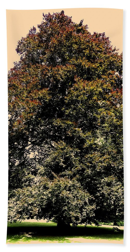 Sonne Hand Towel featuring the photograph My Friend The Tree by Juergen Weiss