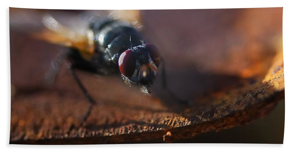 Nature Bath Sheet featuring the photograph My My My Little Fly by Susan Capuano