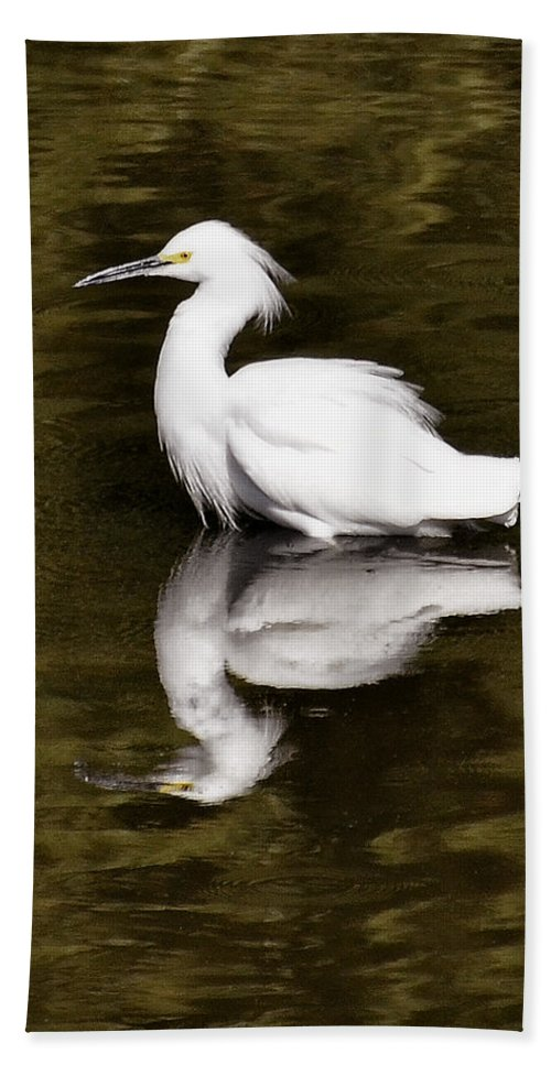 Snowy Egret Bath Sheet featuring the photograph My Reflection by Saija Lehtonen
