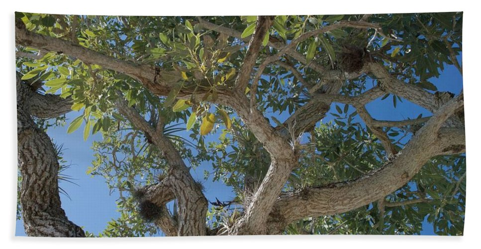 Air Plants Hand Towel featuring the photograph Naples Tree by Joseph Yarbrough