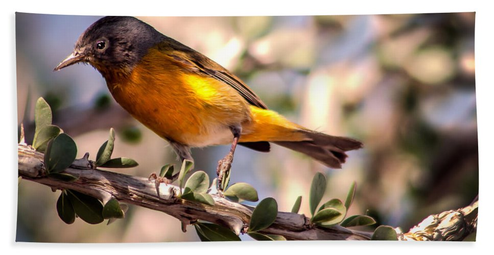 Oreothlypis Ruficapilla Bath Sheet featuring the photograph Nashville Warbler II by Robert Bales