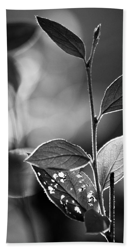 Leaf Bath Sheet featuring the photograph Natures Back Light by Lauri Novak