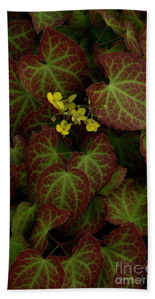 Nature Bath Sheet featuring the photograph Nature's Still Life Of Epimedium by Mike Nellums