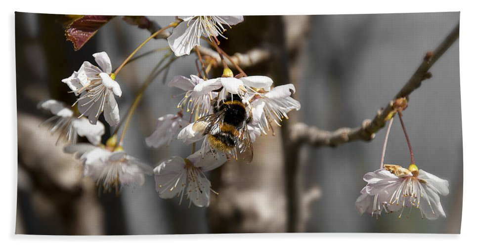 Bee Hand Towel featuring the photograph Nectar Collector by Svetlana Sewell