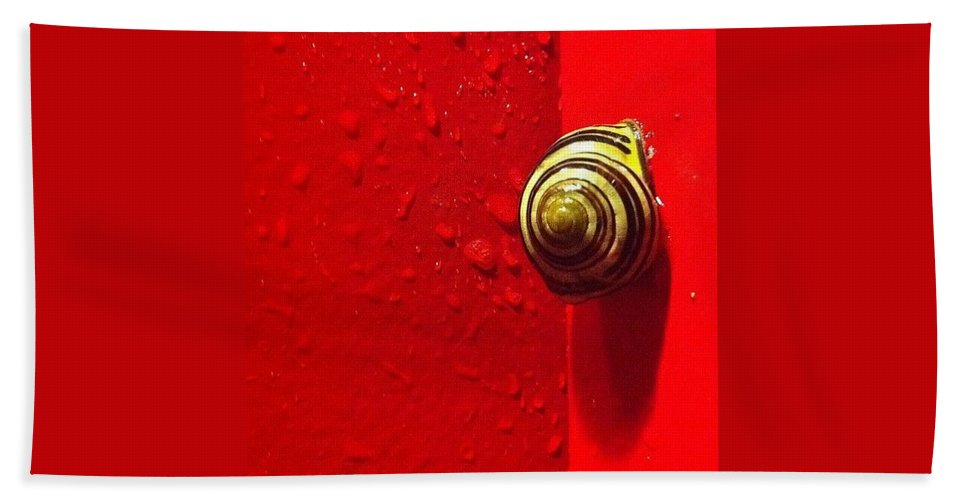 Nofilter Hand Towel featuring the photograph Never A Shortage Of #snails Back Here by Katie Cupcakes