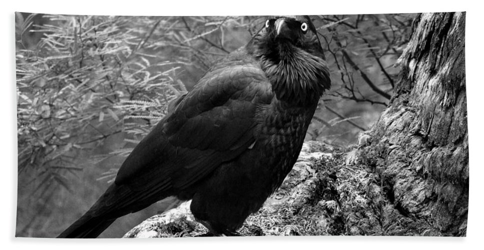 Raven Hand Towel featuring the photograph Nevermore - Black And White by Michelle Wrighton