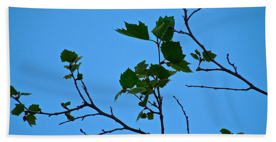 Tree Bath Sheet featuring the photograph New Leaves by Diana Hatcher