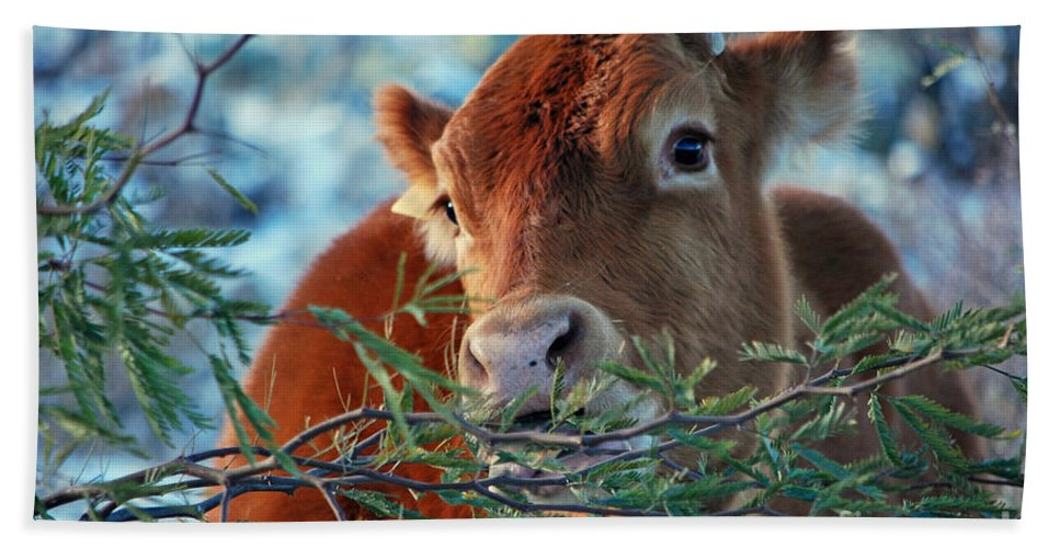 Cow Bath Sheet featuring the photograph New Years Morning Cow by Donna Greene