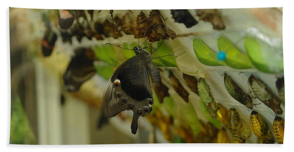 Insects Hand Towel featuring the photograph Newborn At The Butterfly Factory by Jeff Swan