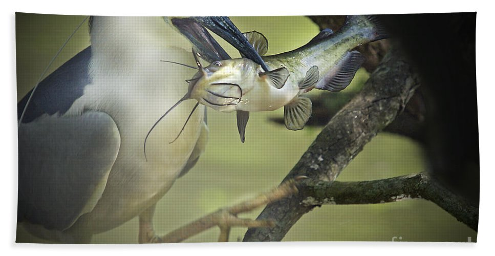 Night Heron Bath Sheet featuring the photograph Night Heron Get Breakfast by TJ Baccari