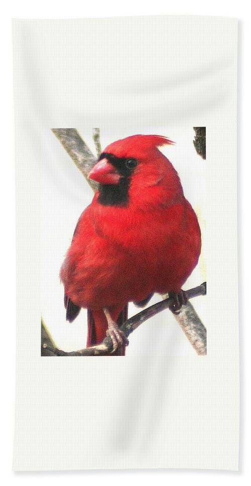 Northern Cardinal Bath Sheet featuring the photograph Northern Cardinal Closeup by Laurel Talabere