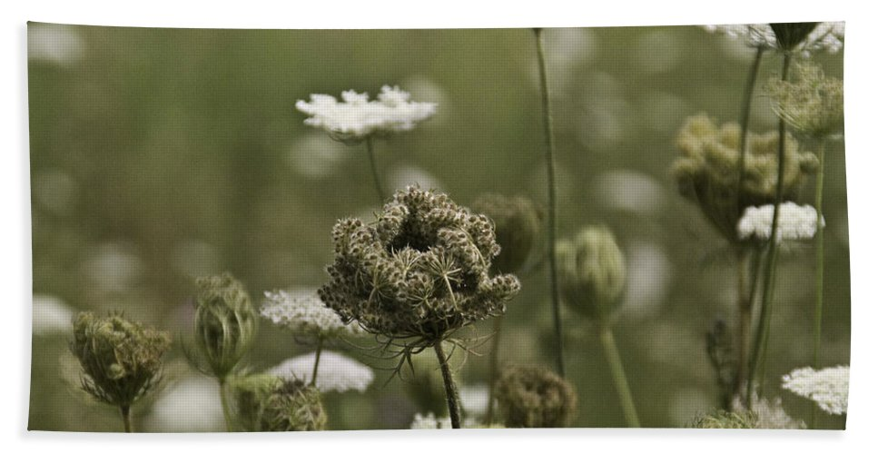 Flower Hand Towel featuring the photograph Not Just A Weed by Trish Tritz