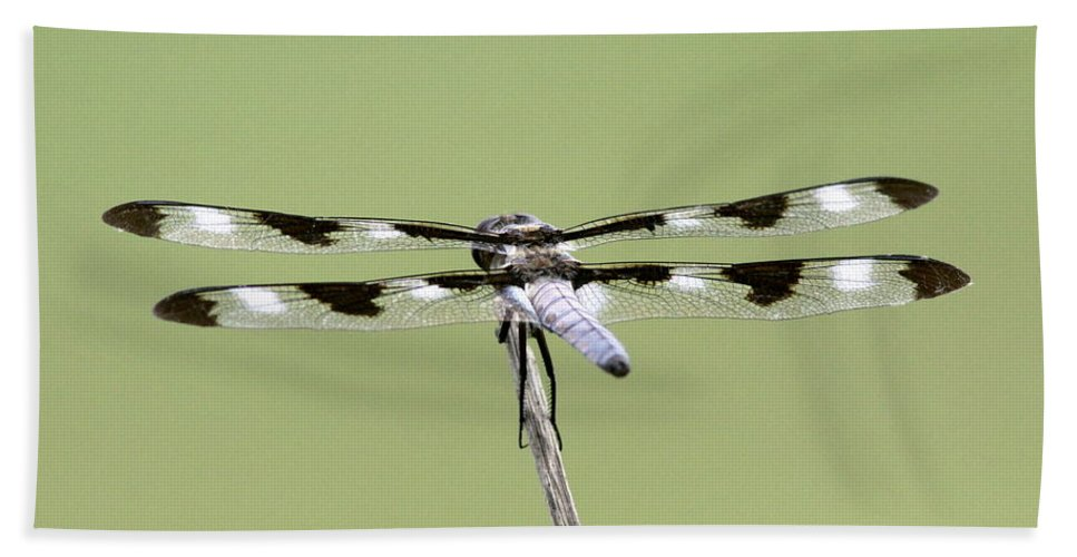 Dragonfly Bath Sheet featuring the photograph Dragonfly - Not Wilbur's And Orville's Idea Was It by Travis Truelove