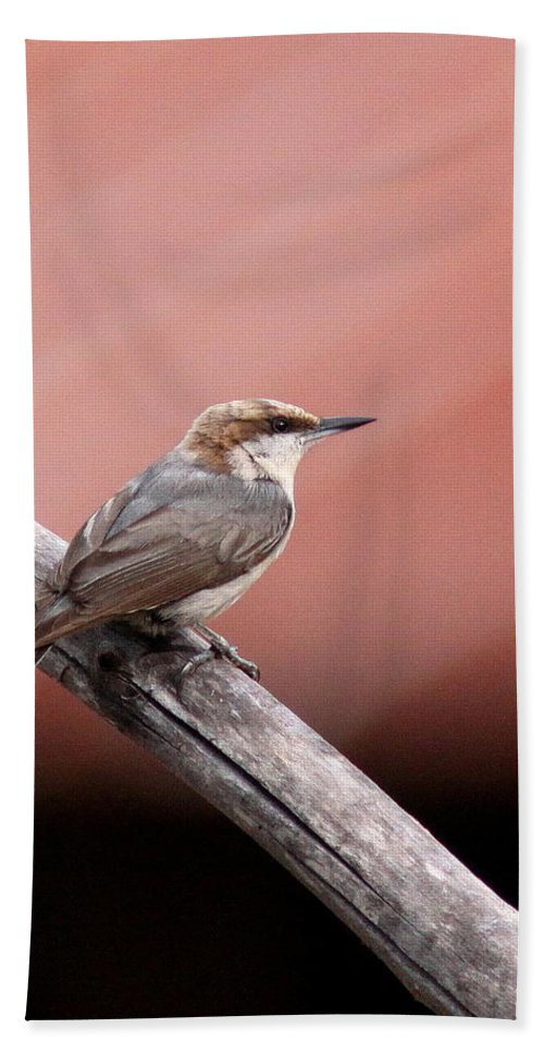 Brown-headed Nuthatch Bath Sheet featuring the photograph Nuthatch - Bird - Barn Roof by Travis Truelove