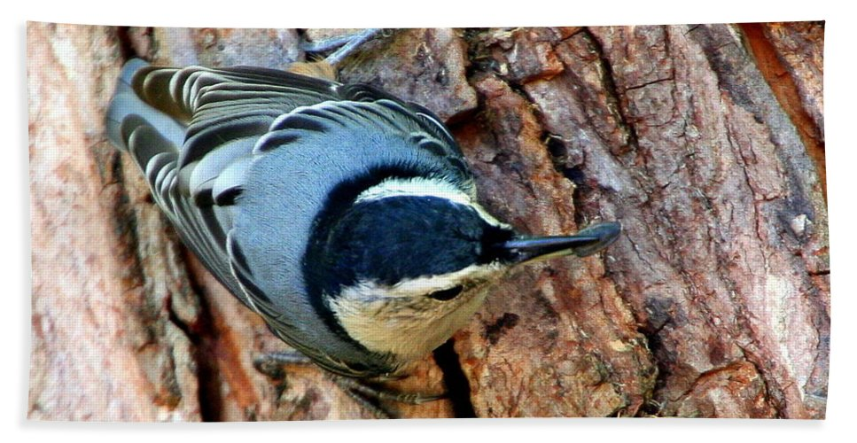 White-breasted Nuthatch Bath Sheet featuring the photograph Nuthatch Heading Down by Laurel Talabere