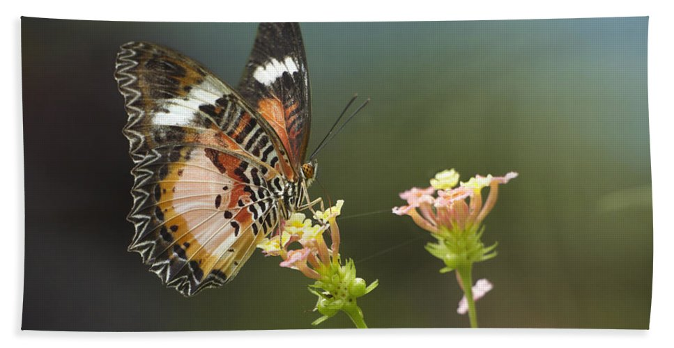 Mp Hand Towel featuring the photograph Nymphalid Butterfly Cethosia Luzonica by Tim Fitzharris