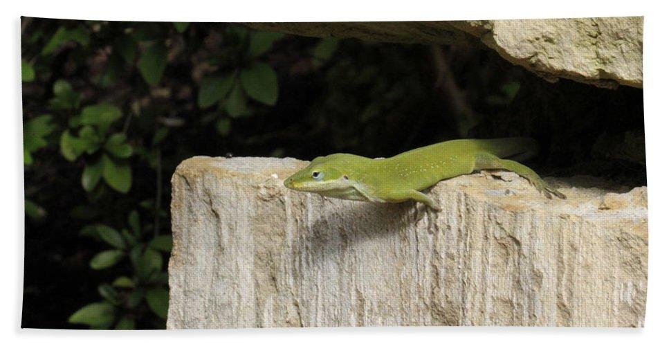 Green Lizard Bath Sheet featuring the photograph Observation Post by Douglas Barnard