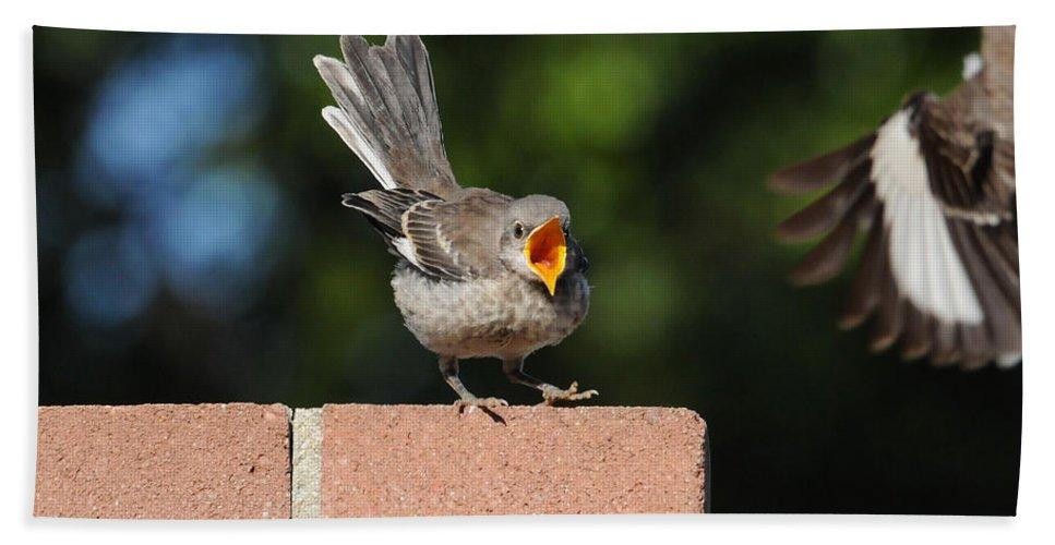 Birds Bath Sheet featuring the photograph Oh...so Demanding by Lynn Bauer