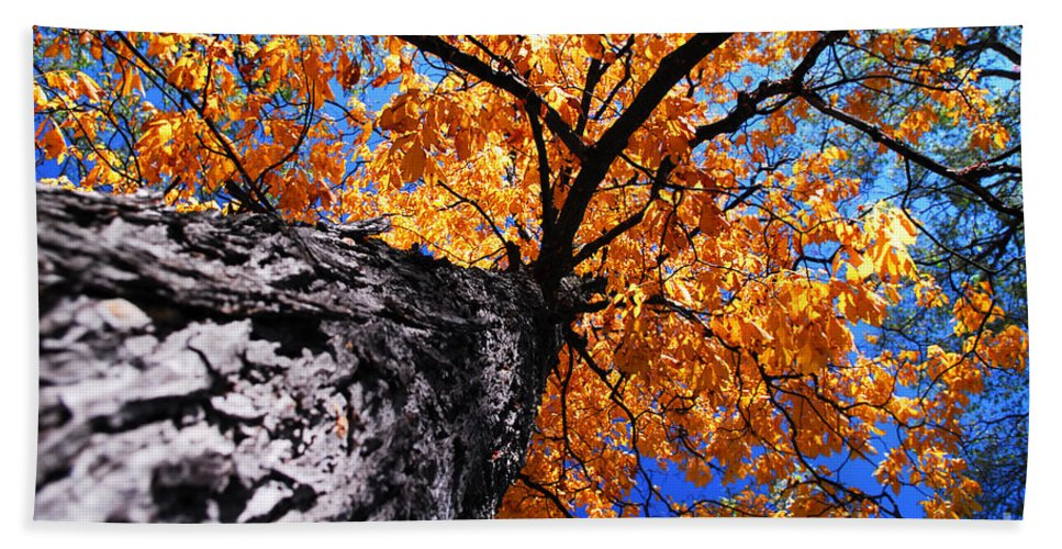 Tree Hand Towel featuring the photograph Old Elm Tree In The Fall by Elena Elisseeva