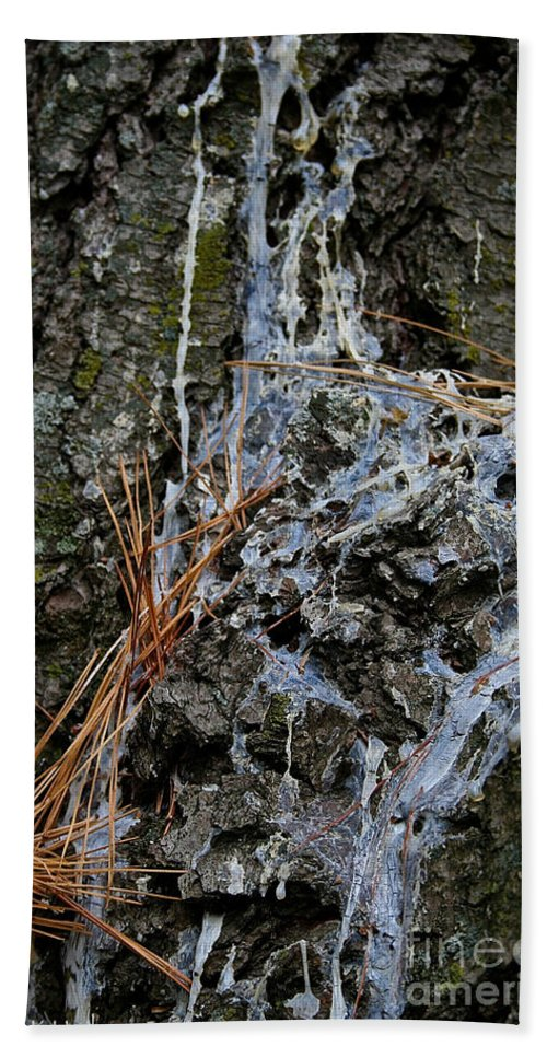 Outdoors Hand Towel featuring the photograph Old Needles And Sap by Susan Herber