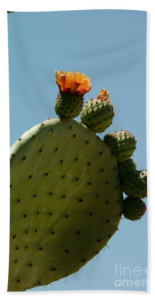 Cactus Bath Sheet featuring the digital art Old Town San Diego by Carol Ailles