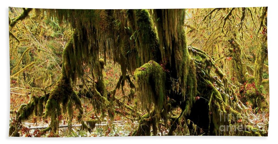 Hoh Rainforest Hand Towel featuring the photograph Olympic Moss by Adam Jewell