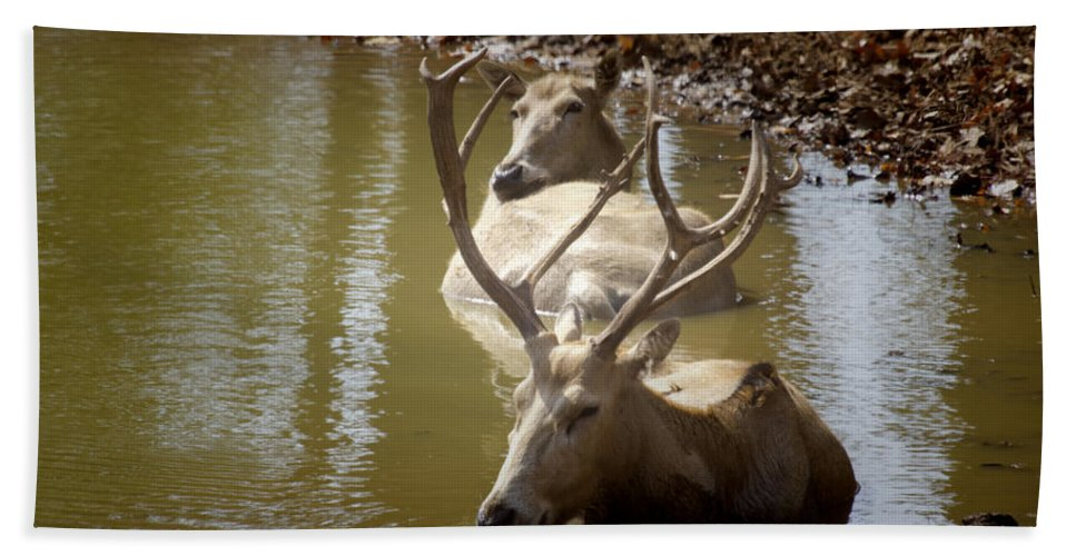 Deer Hand Towel featuring the photograph On A Hot Summers Day by Douglas Barnard