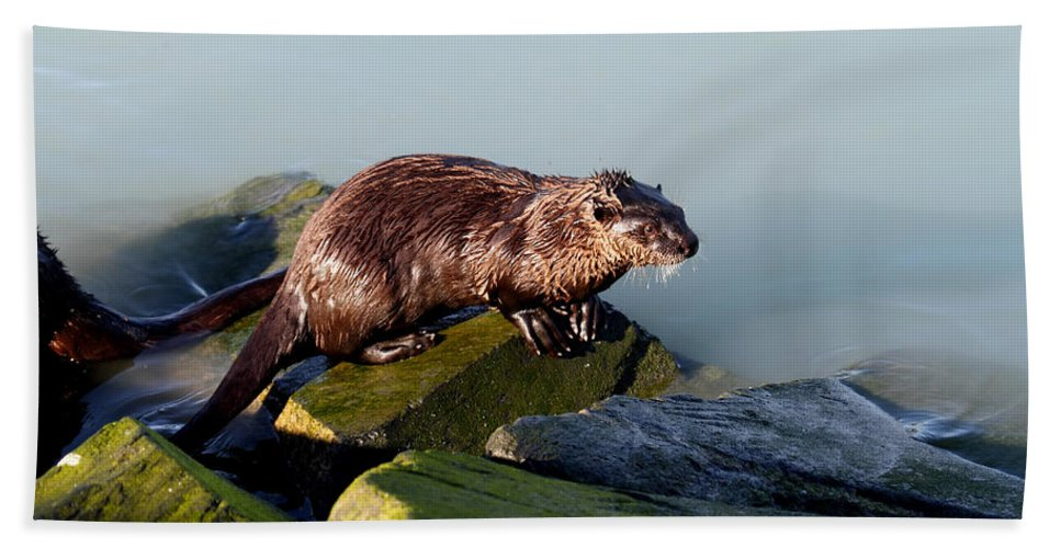 Doug Lloyd Hand Towel featuring the photograph On The Rocks by Doug Lloyd