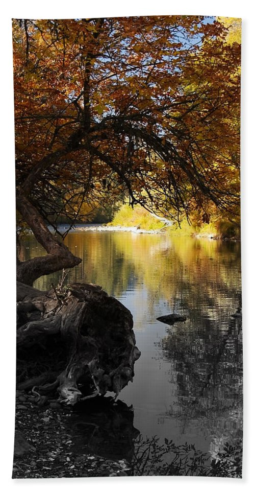 Tree Hand Towel featuring the photograph One Last Glance by Teri Schuster