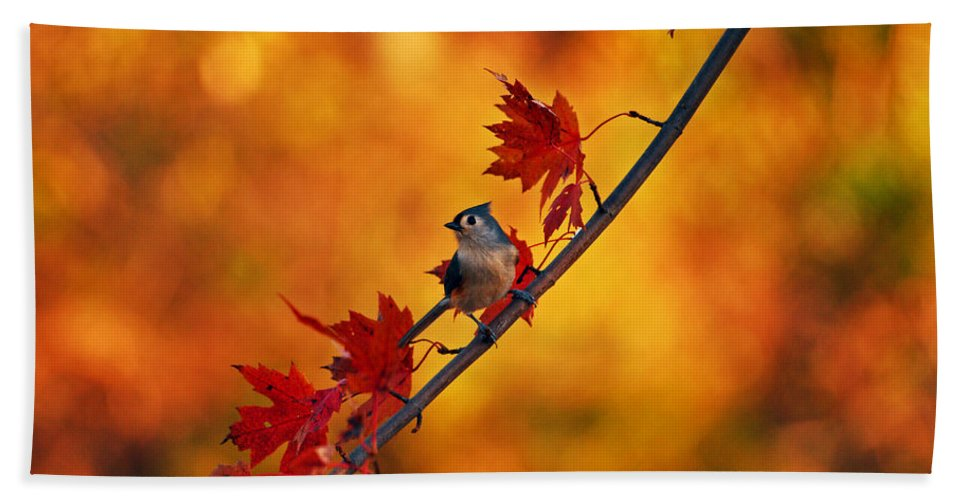 Titmouse Bath Sheet featuring the photograph One Of These Things Is Not Like The Others by Lori Tambakis