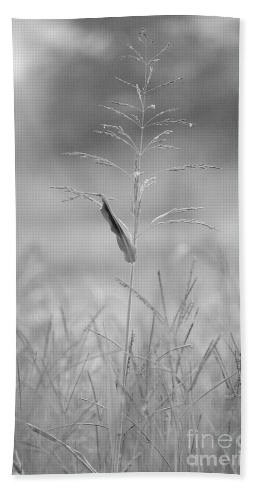 One Bath Sheet featuring the photograph One Tall Blade Of Grass On A Foggy Morn - Bw by Maria Urso