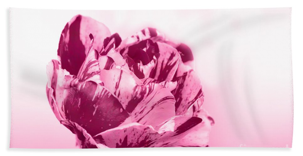 Rose Hand Towel featuring the photograph Only A Rose by Jim And Emily Bush