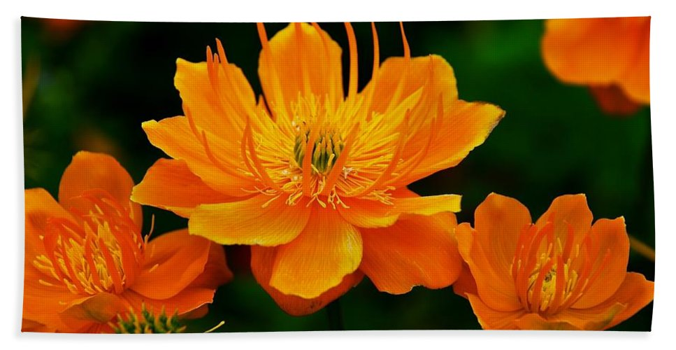 Flowers Bath Sheet featuring the photograph Orange And Yellow by Eric Tressler