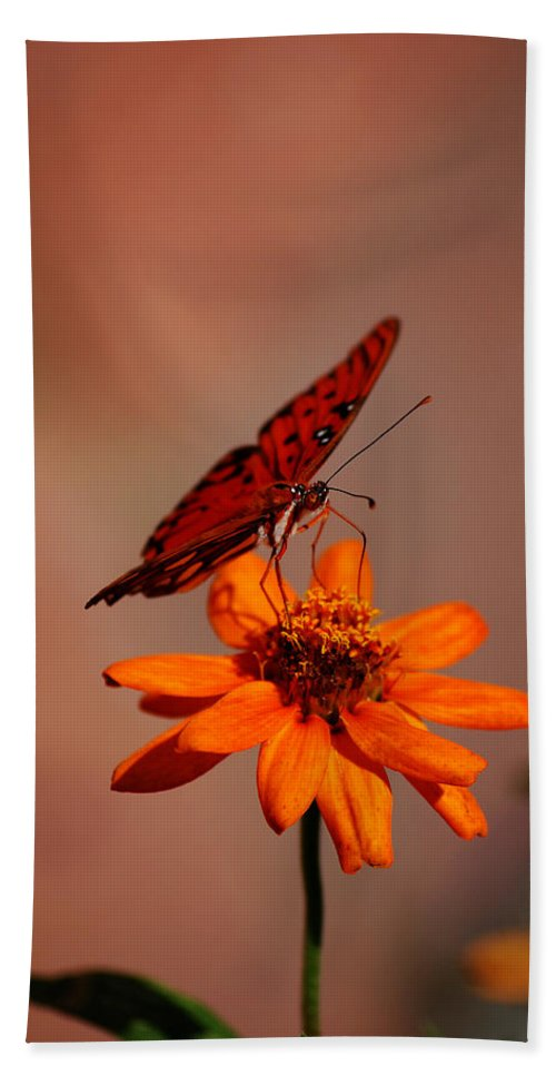 Butterfly Bath Sheet featuring the photograph Orange Butterfly Orange Flower by Lori Tambakis