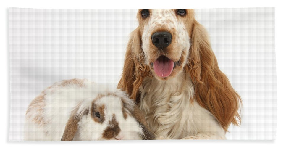 Nature Hand Towel featuring the photograph Orange Cocker Spaniel With Lop Rabbit by Mark Taylor