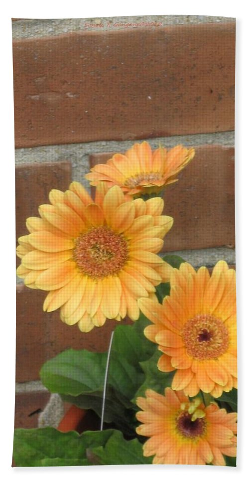 Gerbera Fresh Hand Towel featuring the photograph Orange Delight by Sonali Gangane