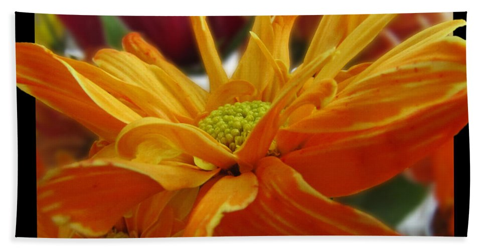 Nature Hand Towel featuring the photograph Orange Juice Daisy by Debbie Portwood