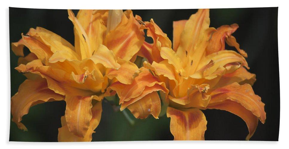 Daylily Bath Sheet featuring the photograph Orange Kwanso Daylily Pair by Teresa Mucha