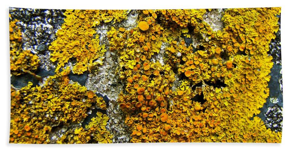 Lichen Bath Sheet featuring the photograph Orange Lichen - Xanthoria Parietina by Mother Nature