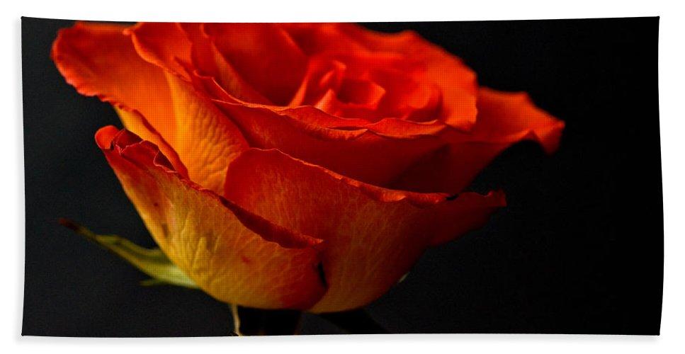 Orange Rose Black Background Bath Sheet featuring the photograph Orange Rose by Steve Purnell