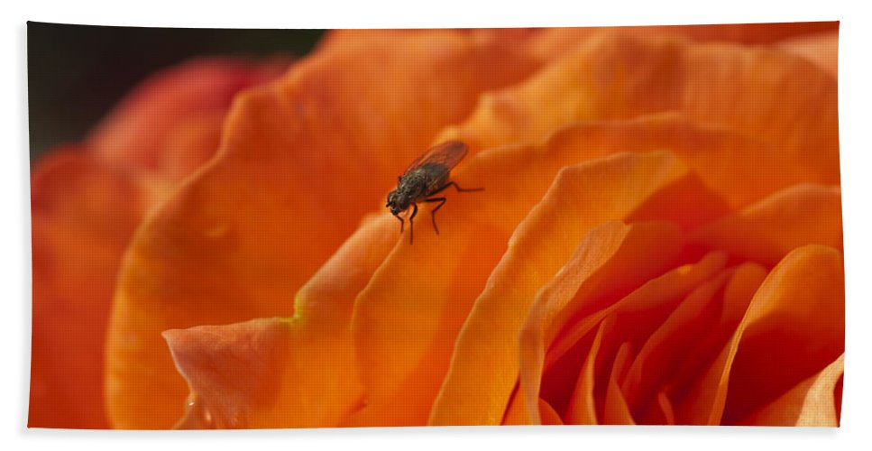 Orange Rose Bath Sheet featuring the photograph Orange With Visitor by Steve Purnell