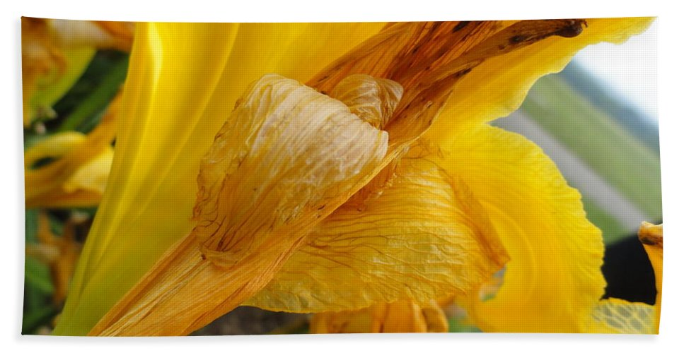 Holmesbrook Photographs Bath Sheet featuring the photograph Orange You Smiling by Trish Hale
