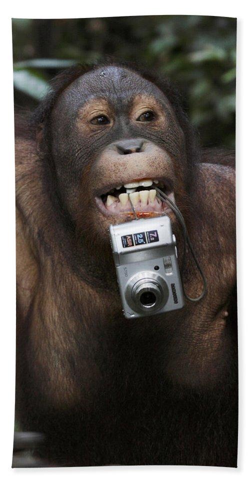 Mp Hand Towel featuring the photograph Orangutan With Tourists Camera by Hiroya Minakuchi