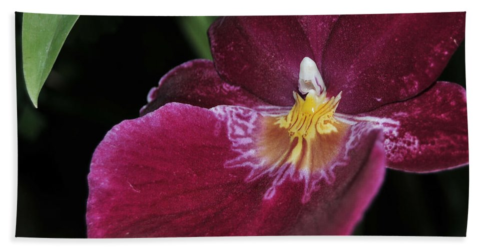 Orchid Bath Sheet featuring the photograph Orchid 252 by Terri Winkler