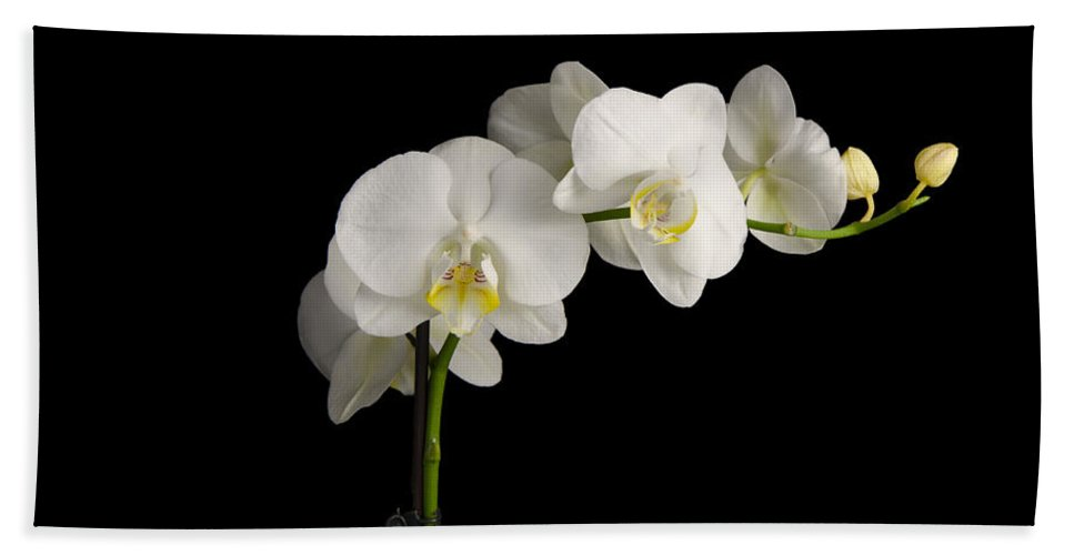 Orchid Hand Towel featuring the photograph Orchid On Black by Nick Field