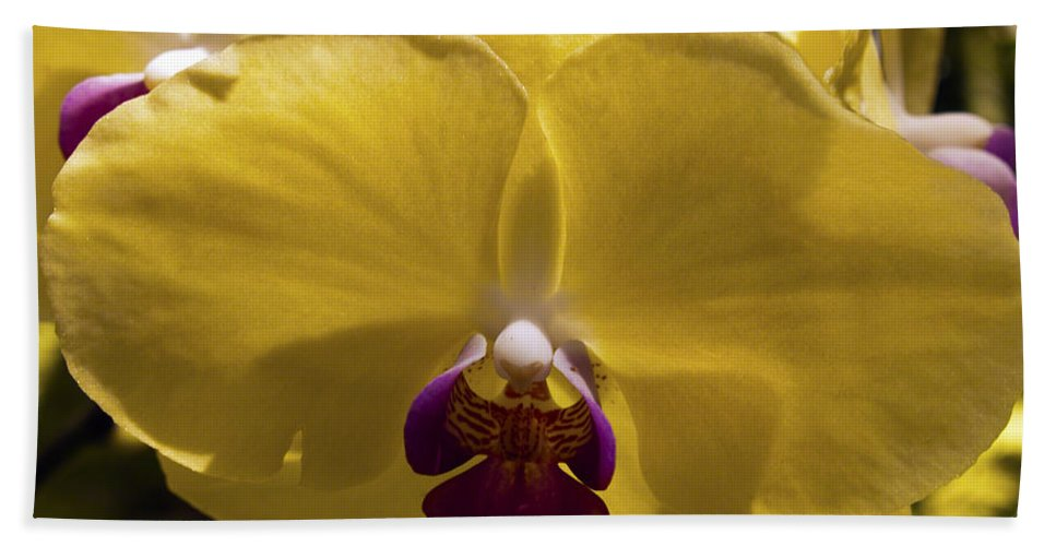 Fine Art Photography Hand Towel featuring the photograph Orchid Study Vi by Patricia Griffin Brett