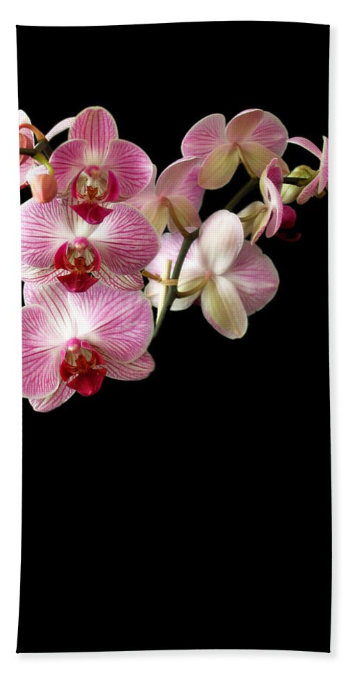 Orchid Bath Sheet featuring the photograph Orchids 1 by Jessica Velasco