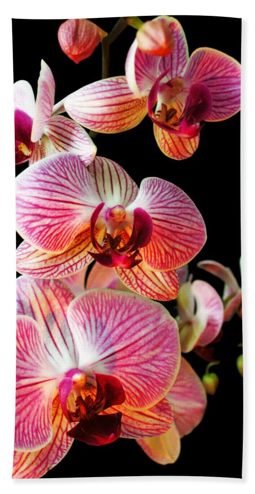 Orchid Bath Sheet featuring the photograph Orchids 2 by Jessica Velasco