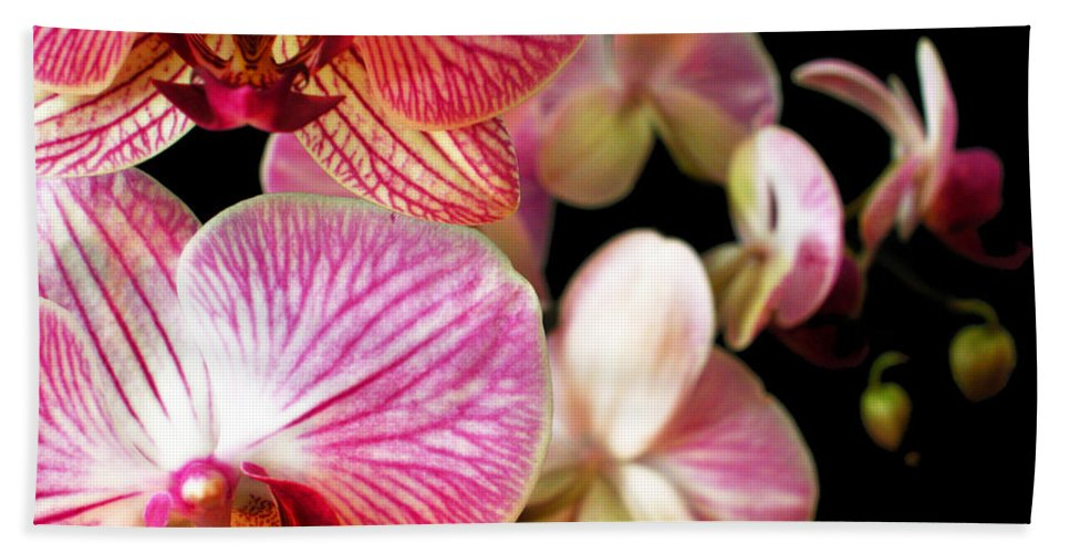 Orchid Bath Sheet featuring the photograph Orchids 3 by Jessica Velasco