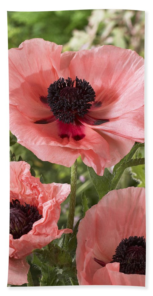 Vp Hand Towel featuring the photograph Oriental Poppy Papaver Orientale Salmon by VisionsPictures